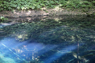 十二湖の青池の写真・画像素材[2171495]