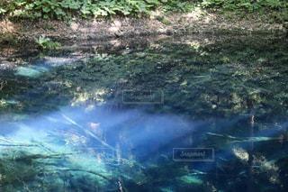十二湖の青池の写真・画像素材[2171592]