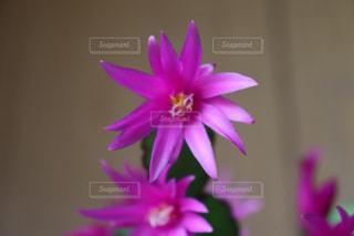 紫の綺麗な花の接写の写真・画像素材[2235716]