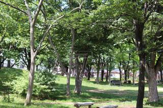 公園内の風景の写真・画像素材[2277512]