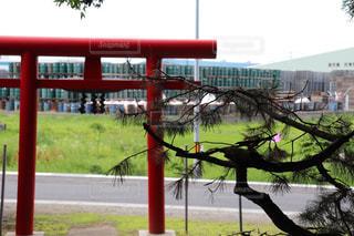 神社の赤い鳥居と松の木の写真・画像素材[2293352]