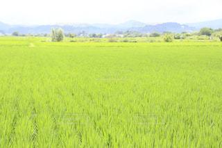 田舎の綺麗な田んぼの風景の写真・画像素材[2326005]