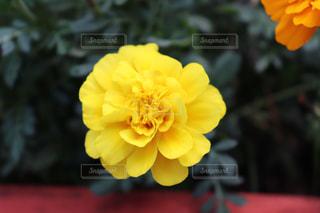 公園に咲く綺麗でカラフルな花の写真の写真・画像素材[2434795]
