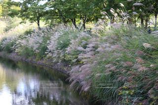 墓地公園内の綺麗な風景写真の写真・画像素材[2458254]