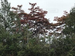 虹の湖公園から見た綺麗な風景写真の写真・画像素材[2471808]