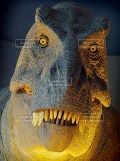 恐竜の写真・画像素材[79197]
