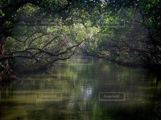 森林の写真・画像素材[79206]
