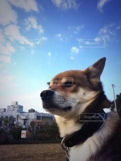 犬の写真・画像素材[82058]