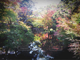 自然の写真・画像素材[259013]