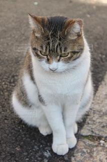 No.266382 猫