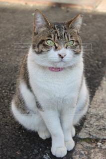 No.266383 猫