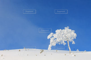 冬の写真・画像素材[286081]