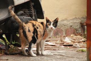 猫の写真・画像素材[339217]