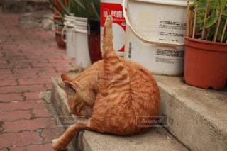 猫の写真・画像素材[339228]