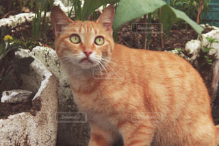 猫 - No.465729