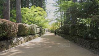 道の端に木のパスの写真・画像素材[1229966]