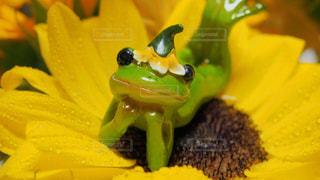 近くの花のアップの写真・画像素材[1266706]
