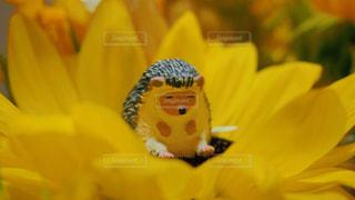 近くに黄色い花のアップの写真・画像素材[1266707]