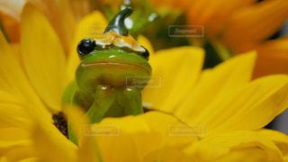 近くの花のアップの写真・画像素材[1266708]