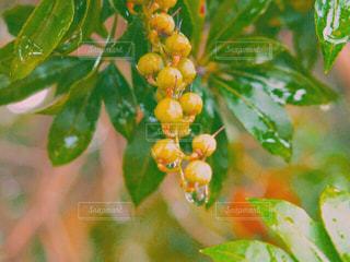 近くの植物のアップの写真・画像素材[1416363]