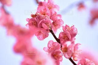 近くの花のアップの写真・画像素材[1807533]