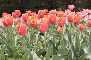 花のクローズアップの写真・画像素材[2102581]
