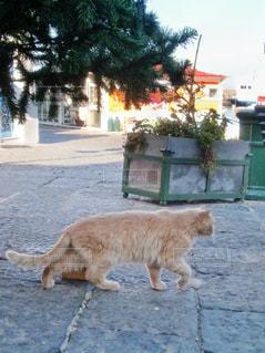 カプリ島でであった猫の写真・画像素材[2128774]