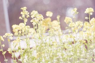 花のクローズアップの写真・画像素材[2179254]