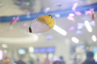 那覇空港でめんそーれの写真・画像素材[2474340]