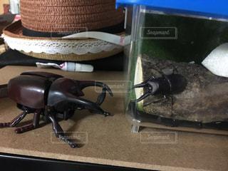 巨大カブトムシ VS クワガタの写真・画像素材[2091647]