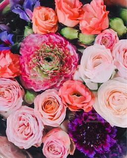 ピンクの花の写真・画像素材[2114201]