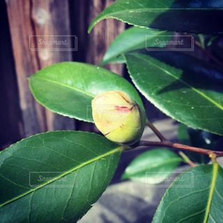 緑の植物のクローズアップの写真・画像素材[2094267]