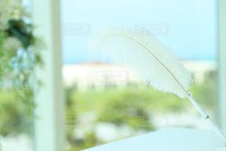 白い羽ペンの写真・画像素材[2093783]