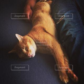 猫の写真・画像素材[2166667]