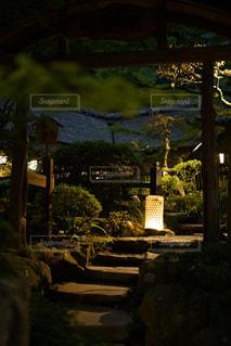 木の隣のベンチの写真・画像素材[2442804]