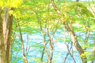 森の木の写真・画像素材[2122401]