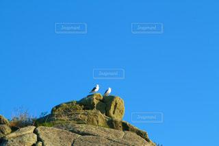 ロッキーの丘の上に立っている鳥の写真・画像素材[2122408]