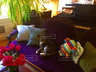 猫の写真・画像素材[2144282]