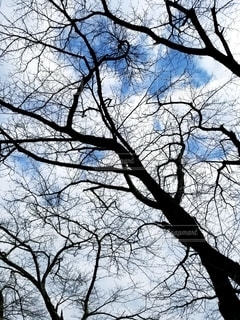 木々と空の写真・画像素材[2773750]