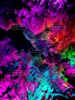 カラフル照明に照らし出される木々の写真・画像素材[2773822]