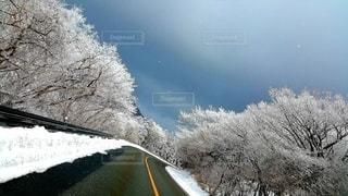 雪道の写真・画像素材[2843327]