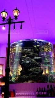 街灯と海水魚の写真・画像素材[2857418]