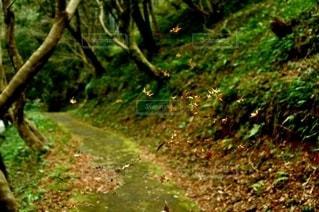 山道の写真・画像素材[2867256]