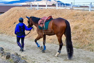 馬の写真・画像素材[2935780]