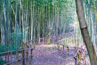 竹林の写真・画像素材[2935781]