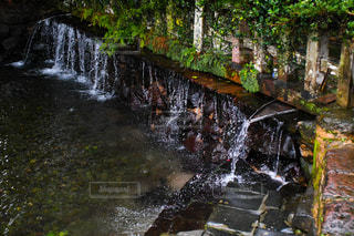 水源の写真・画像素材[2956342]