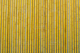 竹の写真・画像素材[2967670]