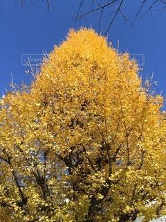 秋の写真・画像素材[14189]
