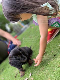 子犬さんこんにちはの写真・画像素材[2285427]