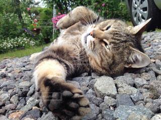 岩の上に横たわっている猫の写真・画像素材[2095606]